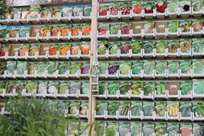 Frø grønnsaker